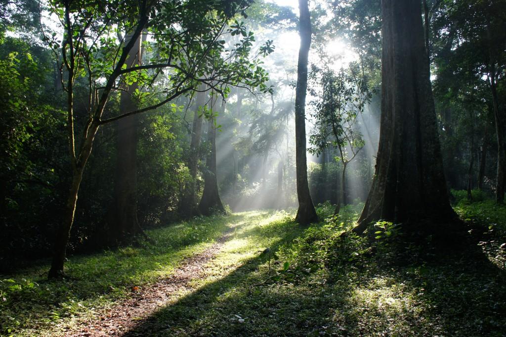 Mpanga Forest