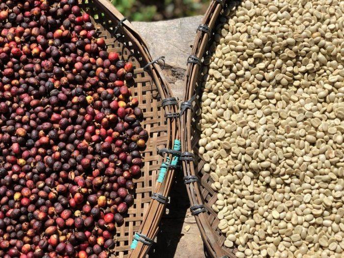 コーヒーナチュラルプロセス